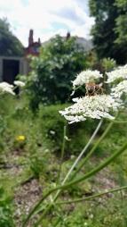 BF honey bee
