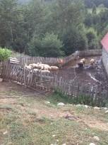 Traditional farm Lepusche