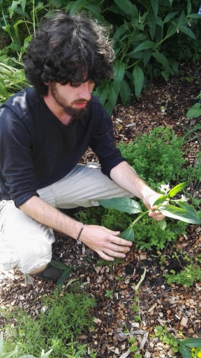 Ben leading Plant ID course
