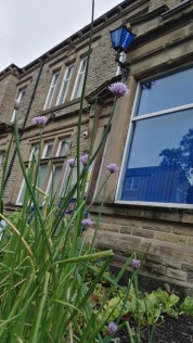 Todmorden edible bed at Police station