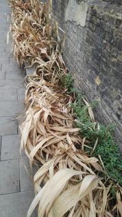 Rain Garden Ewer Street