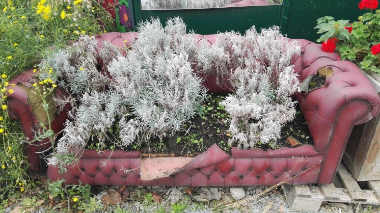 Growing in a sofa