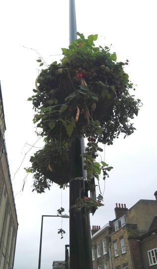 Edible Hanging Basket