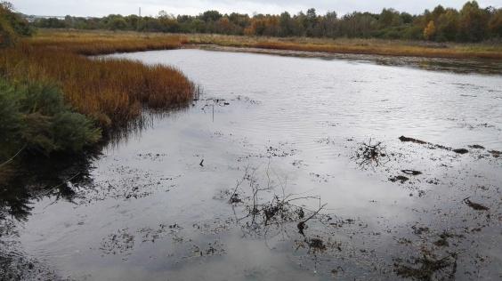 Nature reserve wetland