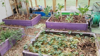 Indoor growing beds Incredible AquaGarden
