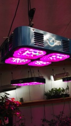 LED lights for hydroponics