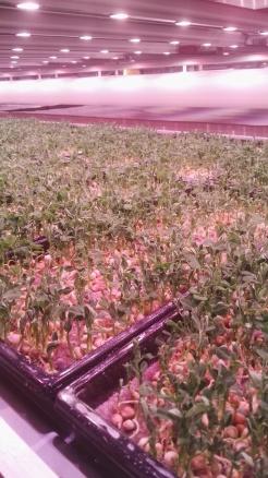 Unit 84 crops