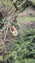 Culpeper Community Garden Image