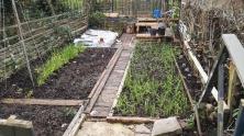 Culpeper Community Gardening