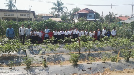 School vegetable garden