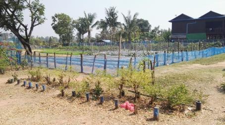 Schools vegetable garden