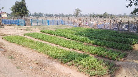 Second School vegetable garden