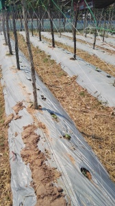 New crops being protected