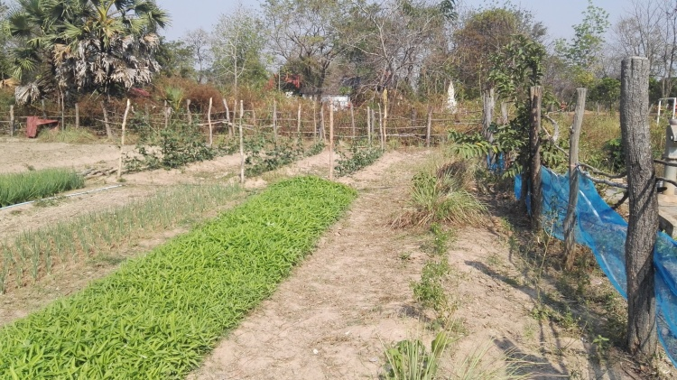 Bansay Reak Secondary School Vegetable Garden