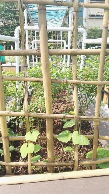 Community Gardening, Hort Park