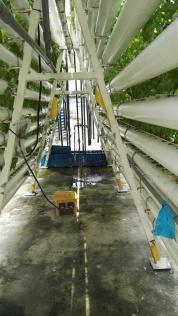 Hydroponics and vertical farming Comcrop Singapore