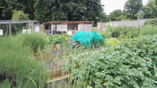 Kensington Garden Allotment