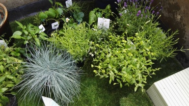 Plants, herbs and vegetables