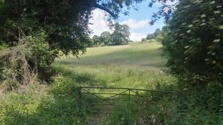 Box Hill Hike