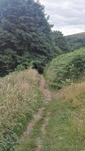 Path to St Ann's Well