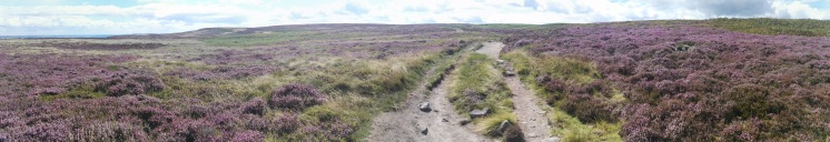 Ikley Moor panorama