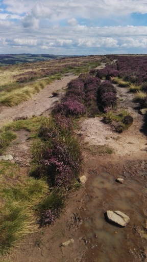 Foot path on the Moors