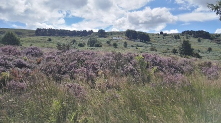 Heather on Ilkley Moor