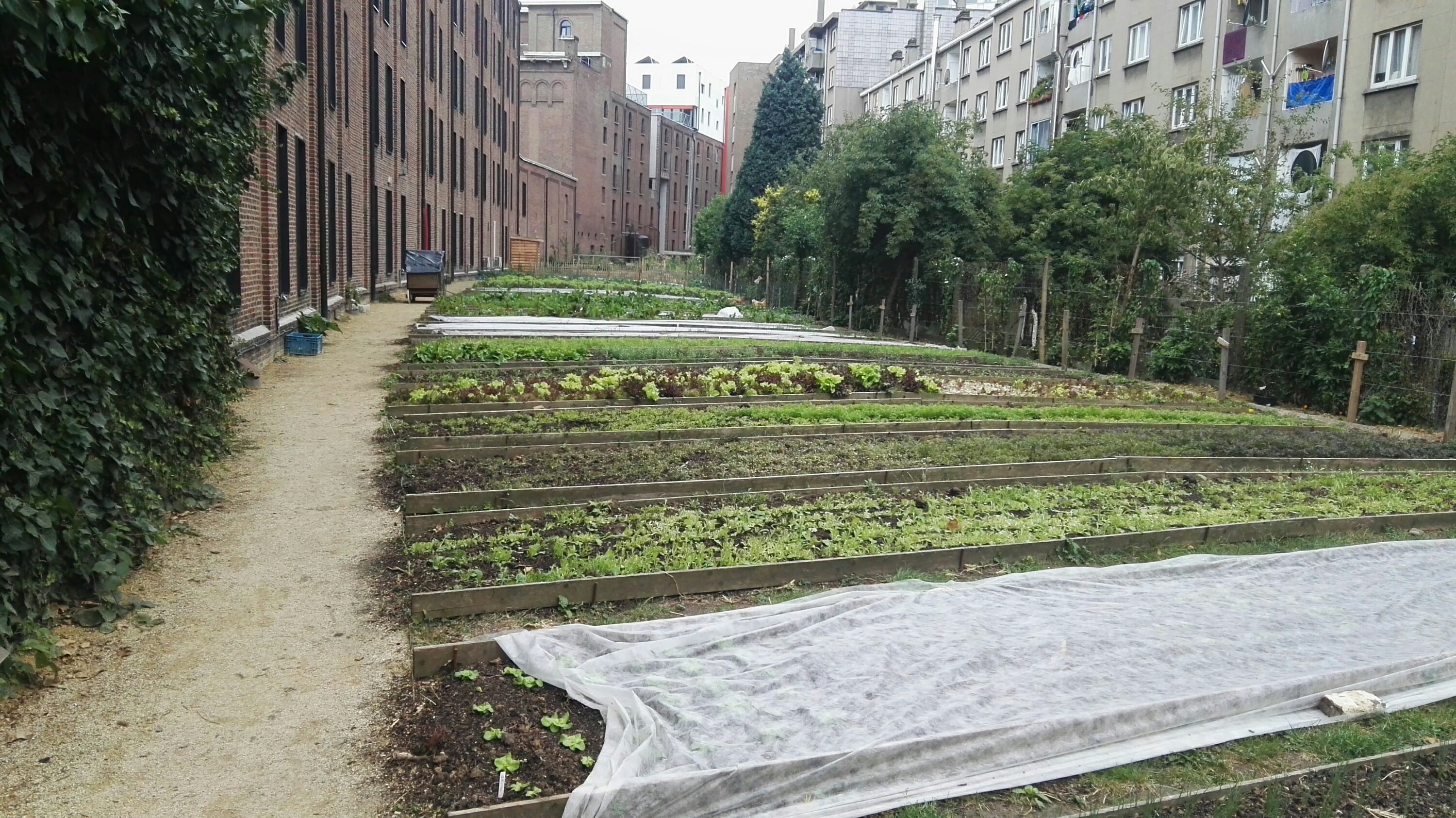 Brussels Community Garden – A regenerative food system