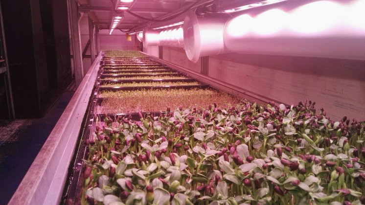 Grow Bristol Microgreens