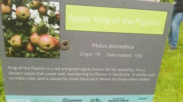 Apple King of the Pippin