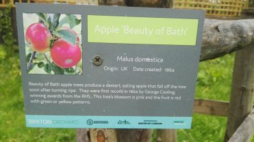 Apple Beauty of the Earth
