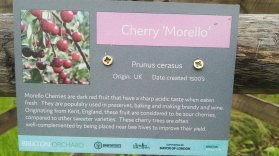 Morello Cherry