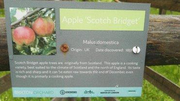 Apple Scotch Bridget