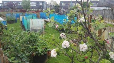 Blenheim Community Garden