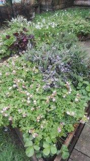 Jubilee Primary School Garden